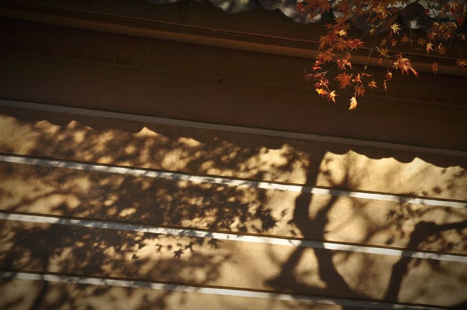 Light And Shadow Shillouette Kamakura Japanese Temple Temple Shadow Red Autumn Autumn Leaves Autumn Colors Snapshot OpenEdit Lighandshadow Light And Shadows Wall