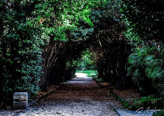 PENTAXKS1 Garden Linedtunnel Trees Nopeople Taking Pictures