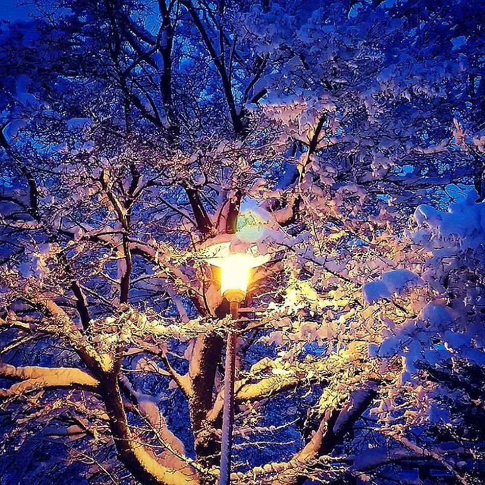 📷❄ Tree Treelights Snow Lights Freezing Lotofsnow Gothenburg City Sweden Enjoyyourday Tagsforlikes Likes White GBG Perfect Nature Natureshots Colorful Epic Snowpic Snowlight Mycketsnö Goteborg Stad Belysning träd kallt vackert snö @awesome_pixels @exaperture @gothenburg_sweden @goagoteborg @goteborgcom @swedenimages