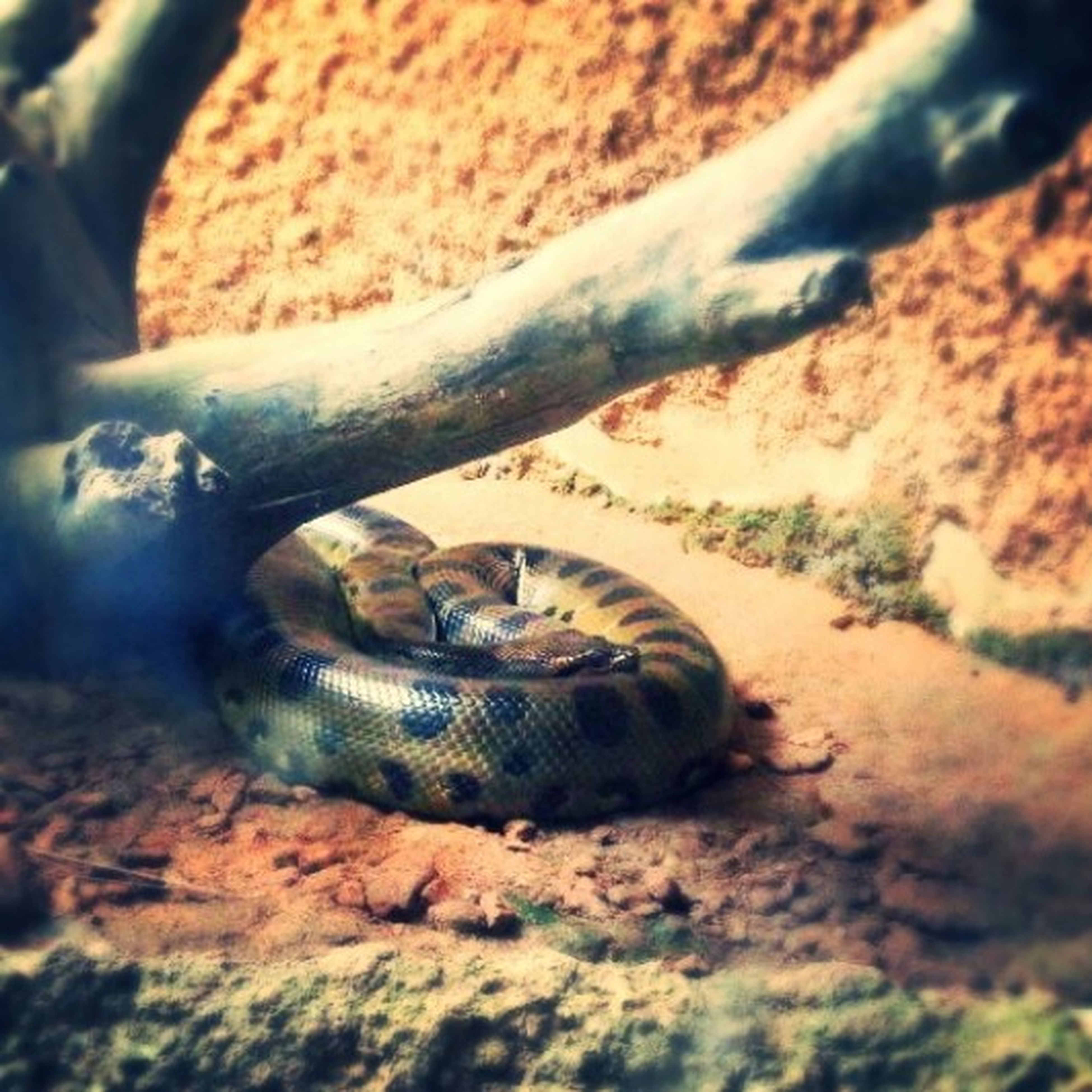 animal themes, animals in the wild, one animal, wildlife, close-up, animal shell, reptile, nature, snail, selective focus, focus on foreground, outdoors, no people, day, snake, turtle, high angle view, rock - object, shell, zoology
