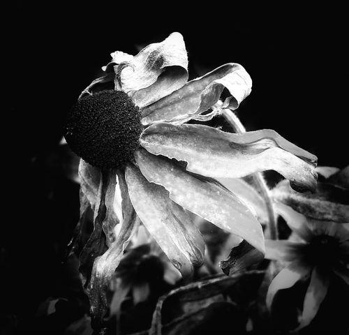 blackandwhite Fugacity Flowers EyeEm Nature Lover AntiM EyeEm Best Shots
