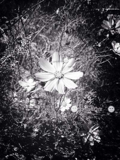 Black & White。