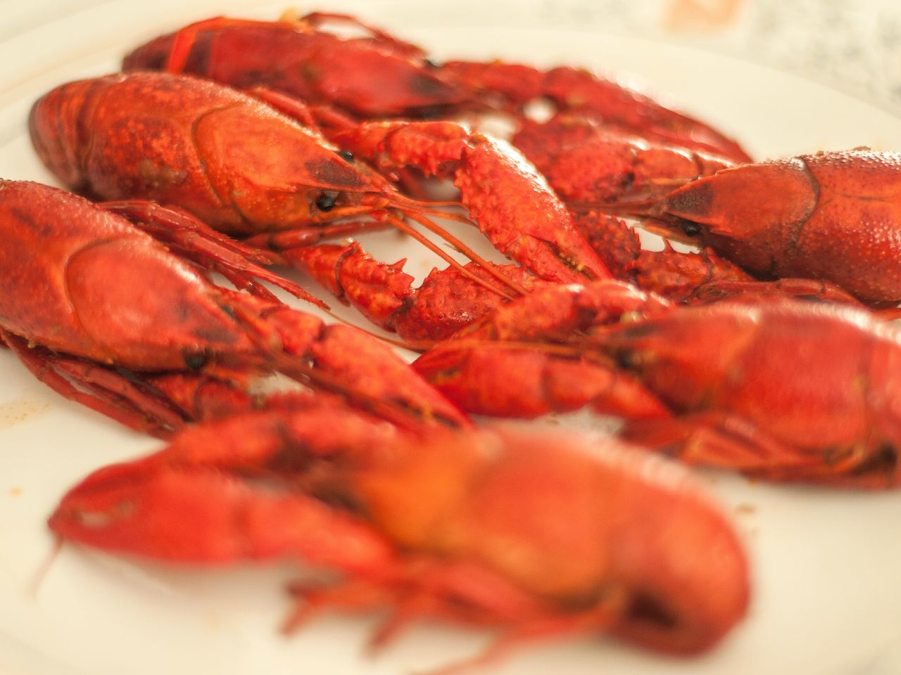 Red Freshness Close-up Food And Drink Food Healthy Eating No People Indoors  Day Bokeh Crawfish Boil  Crawfish Crawfish Time Spicy Food Seafoods Seafood Lovers Crayfish SHELLFISH  Seasonal Food White Background