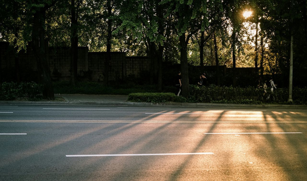 Sunset Light And Shadow Trees Streetphotography Street Walking Around The Street Photographer - 2015 EyeEm Awards Eye4photography  EyeEm Best Shots EyeEm Korea