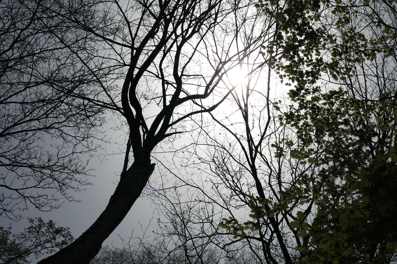 tree, branch, bare tree, nature, low angle view, beauty in nature, no people, outdoors, tranquility, day, sky, forest, scenics