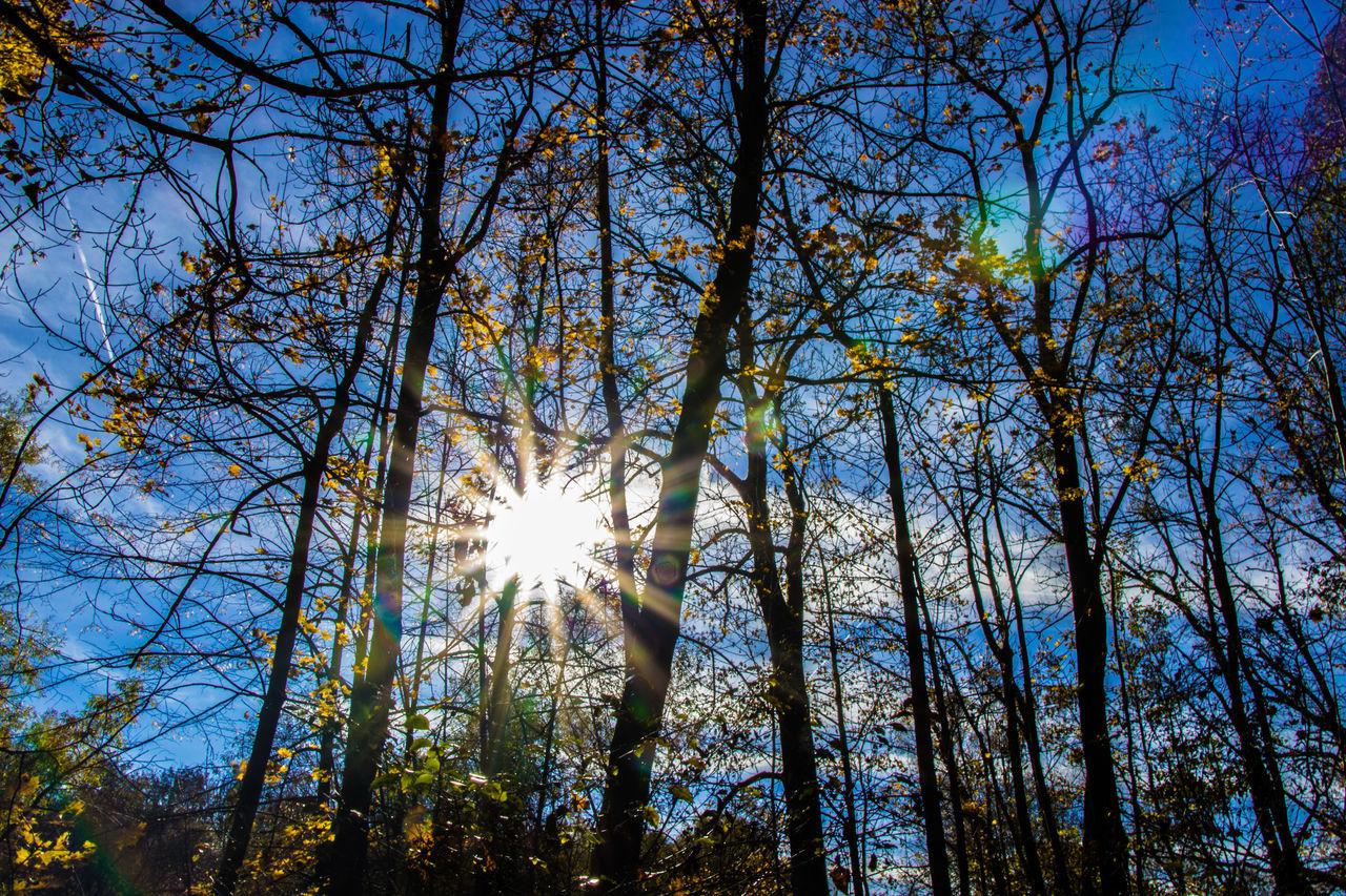 Bäume Outdoors Tree Herbst Herbststimmung Natur Pur München Memories Natur Bäume