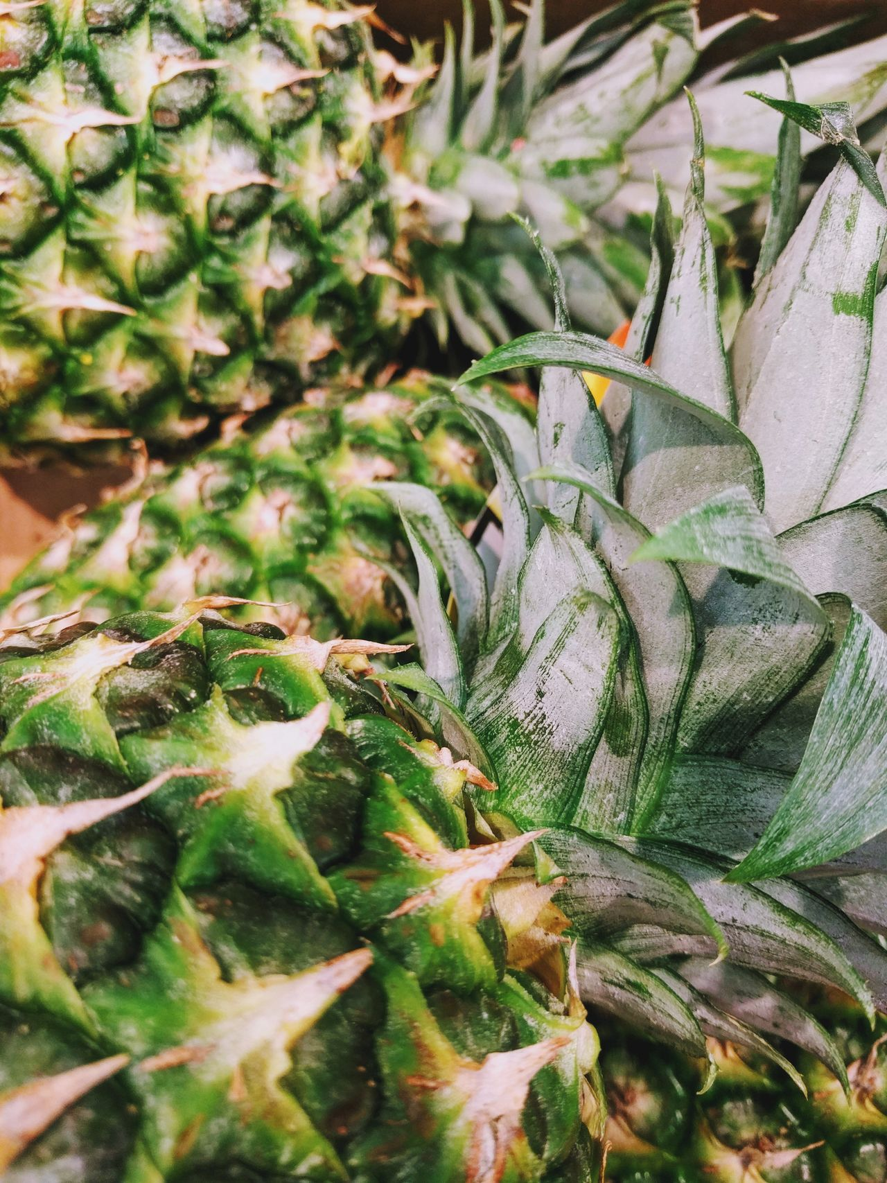 Growth Nature Plant Spiked No People Outdoors Green Color Full Frame Succulent Plant Close-up Day Cactus Backgrounds Beauty In Nature Pineapple Fruit Healthy Eating Food Freshness