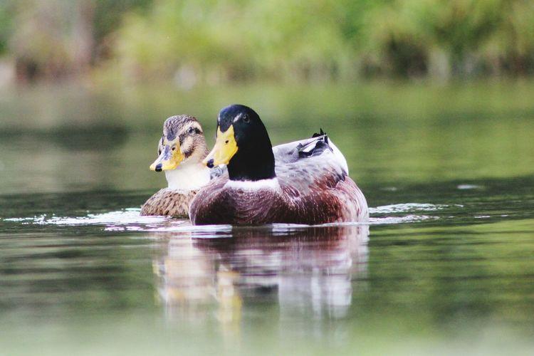 EyeEm Selects Animal Wildlife Reflection Fresh On Eyeem  Animal Themes Nature