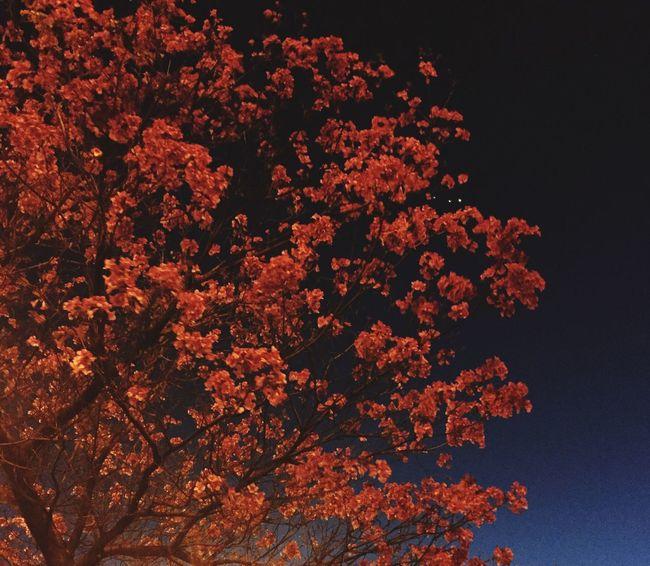 Blue Blue Sky Memories Tree Orange