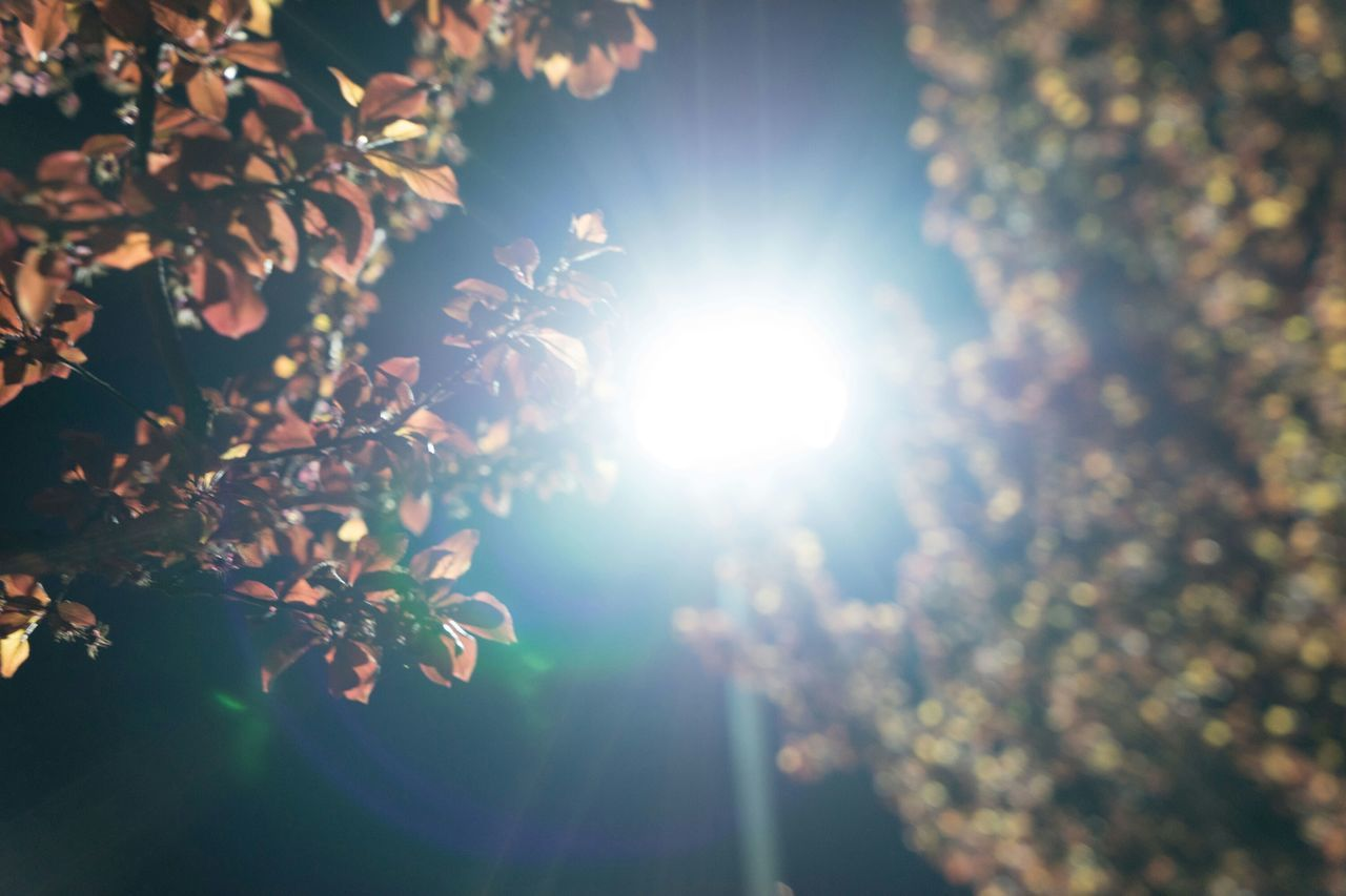 bright, lens flare, sun, nature, sunlight, growth, tree, sunbeam, beauty in nature, plant, leaf, no people, tranquility, flower, outdoors, sunshine, day, branch, freshness, fragility, close-up, sky