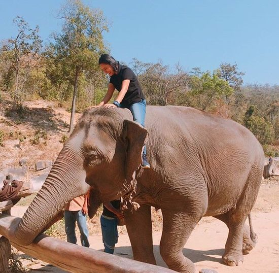 Elephant Only Women Adult Adults Only One Woman Only Indian Elephant Travel Adventure One Person Tourism People Mammal Outdoors Sitting Women Young Adult Nature Young Women One Young Woman Only Animal Trunk