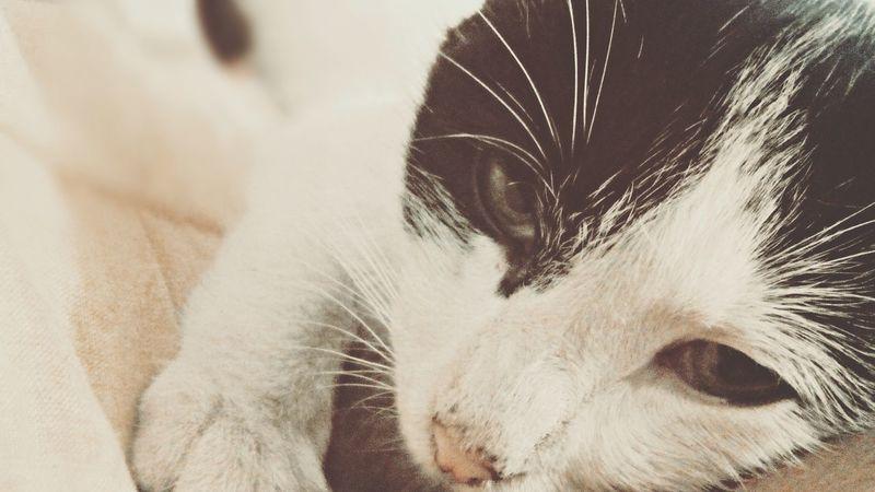 Relaxing Hi! Taking Photos Hello World Life Cat♡ Cat Lovers Cat Cheese! Gatos 😍 Hermoso Naturaleza🌾🌿 Gatosfelizes Gatos Vida Enjoying Life