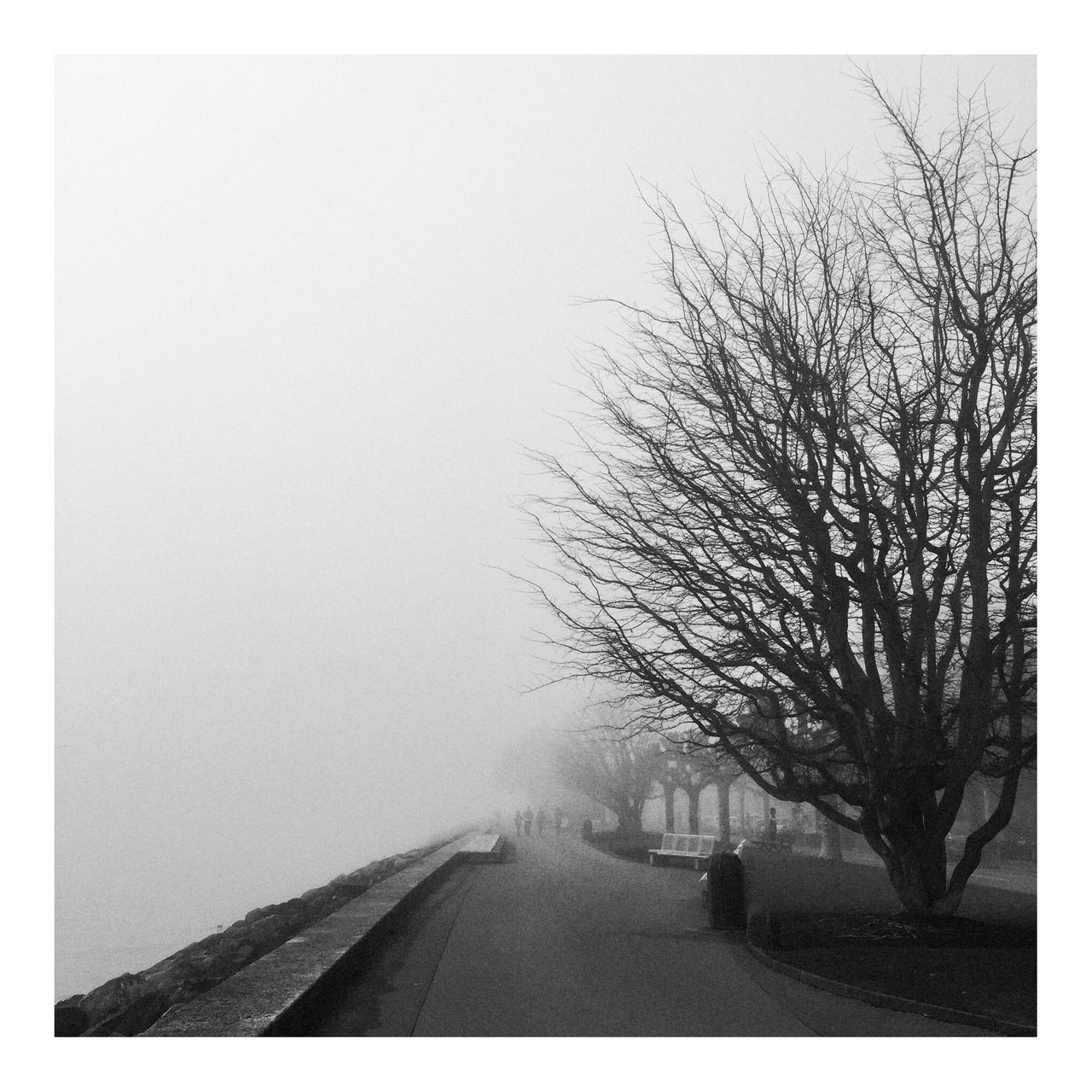 Tree The Way Forward Nature Cold Temperature Bare Tree Winter Scenics Bea's Mood  Livingwiththehomies Water Calm Igerslausanne Shootermag_usa Shootermag Fog