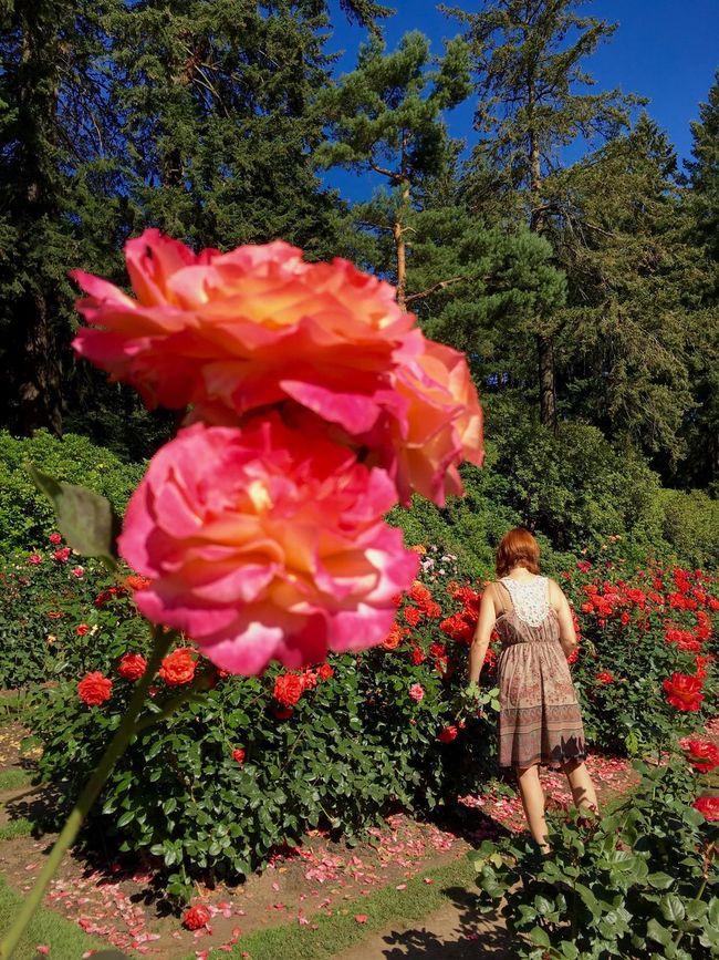 Color Palette Colour Of Life Garden Roses Gardening Portland