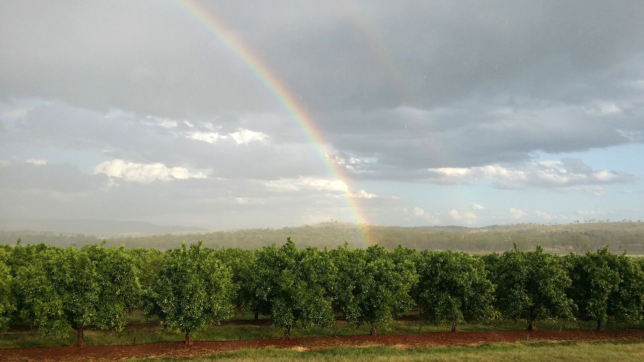 Agriculture Colorful Day Double Rainbow Field Growth Landscape Lemon Trees Multi Colored Nature Non-urban Scene Outdoors Rainbow Rainbow🌈 Rural Scene Scenics Sky Tranquil Scene Tranquility