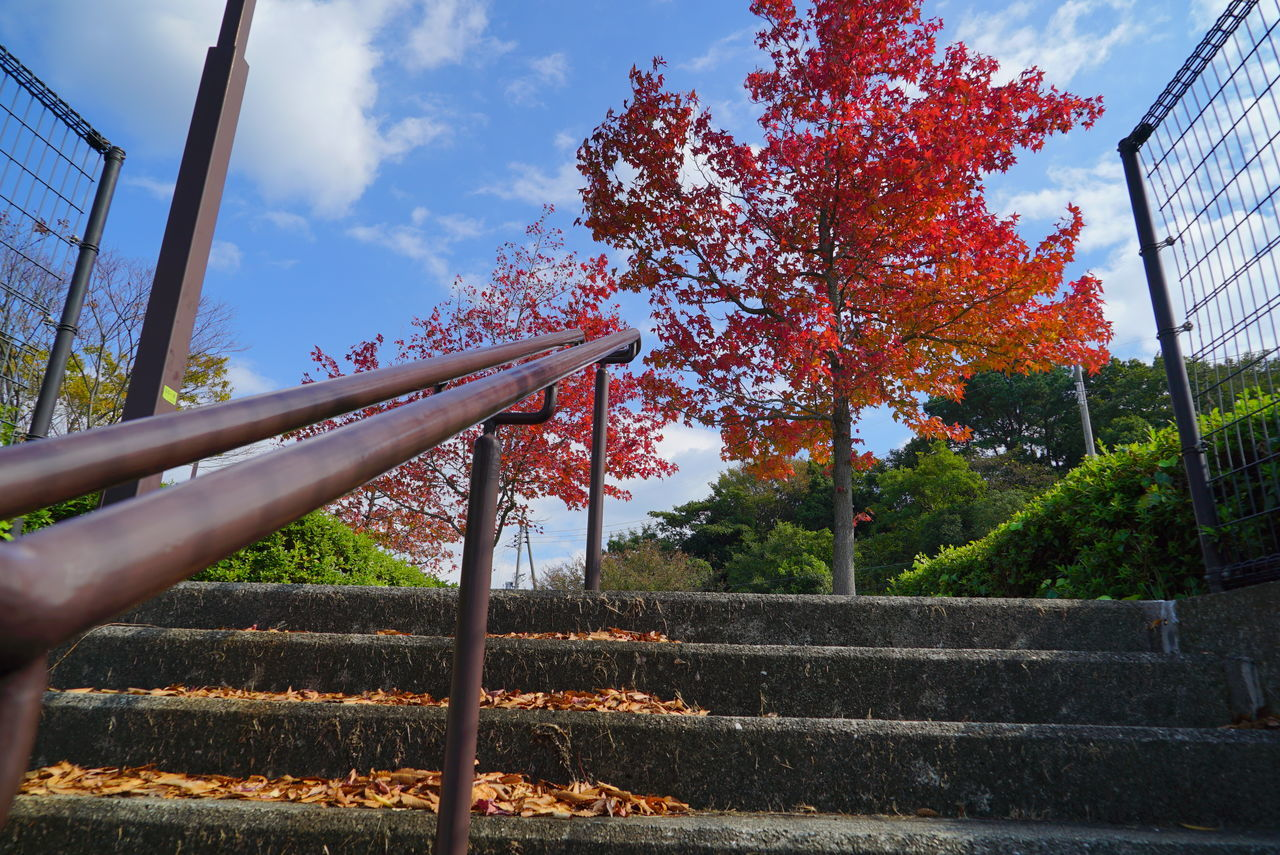 autumn, tree, railing, steps, sky, day, staircase, leaf, outdoors, steps and staircases, nature, built structure, change, real people, one person, human hand, architecture, human body part, close-up, beauty in nature
