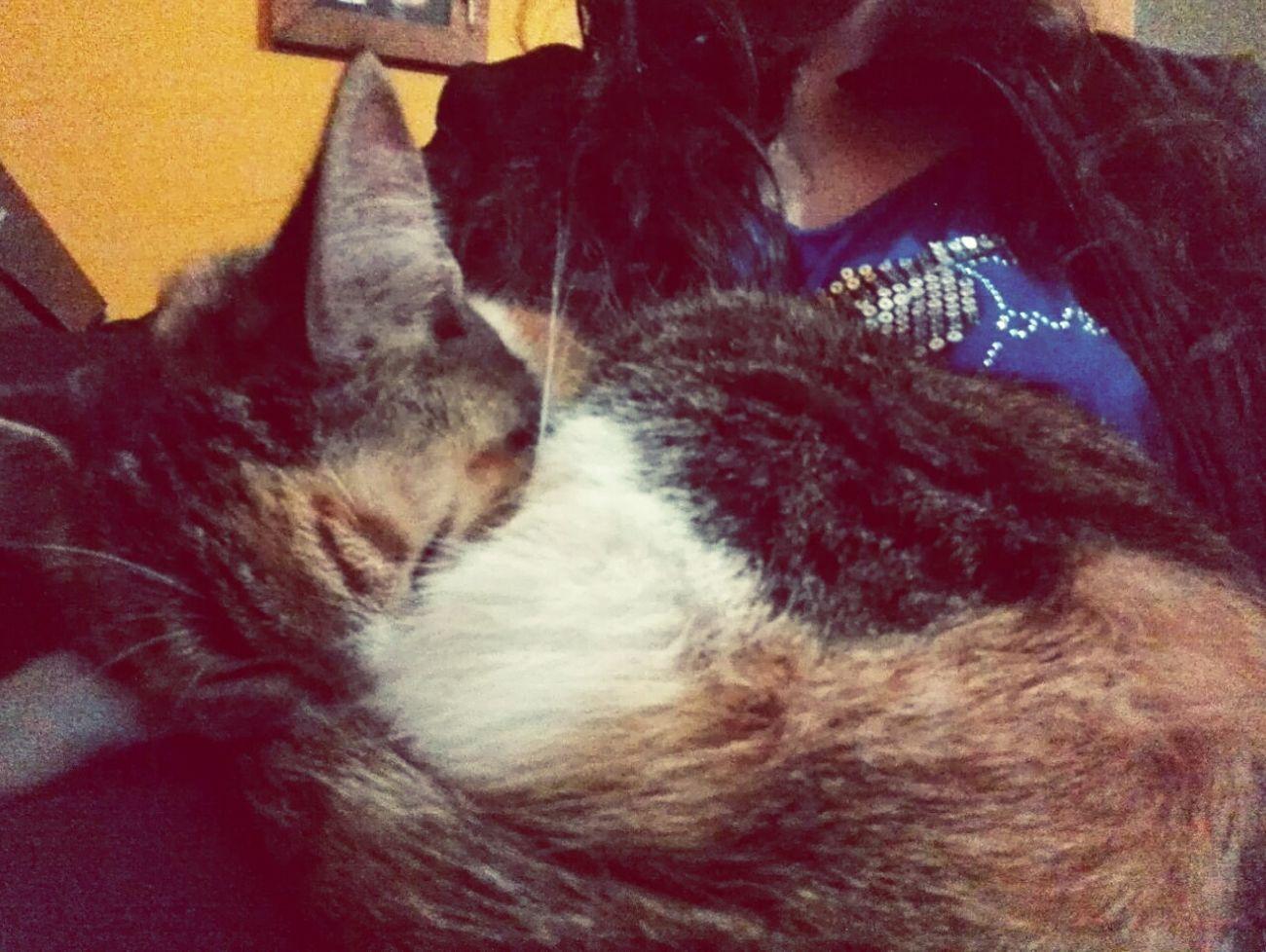 Ella me usa de almohadon ♡ Gatuno Gatitos Gatita  Cats 🐱 Catlovers Cats Of EyeEm Catsofinstagram Cat♡ Cat Lovers Catsagram Cats Gatitas