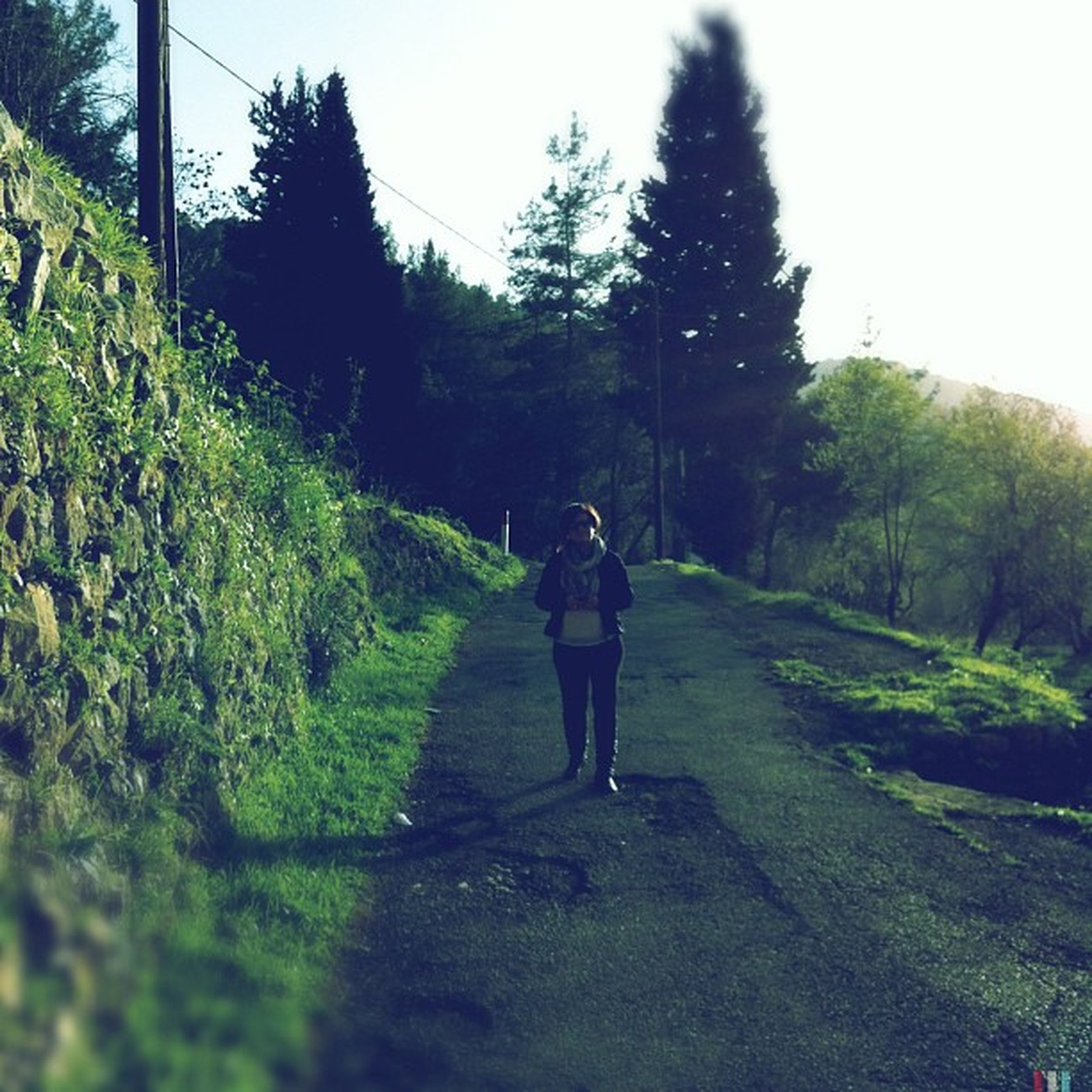 full length, lifestyles, tree, rear view, grass, green color, casual clothing, leisure activity, walking, growth, plant, standing, clear sky, men, the way forward, day, road, nature