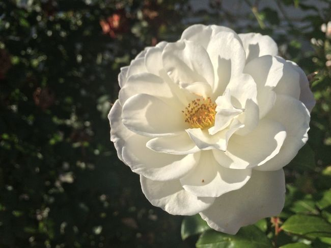 Close-up Flower Flower Head Fragility Freshness In Bloom Nature Petal Springtime