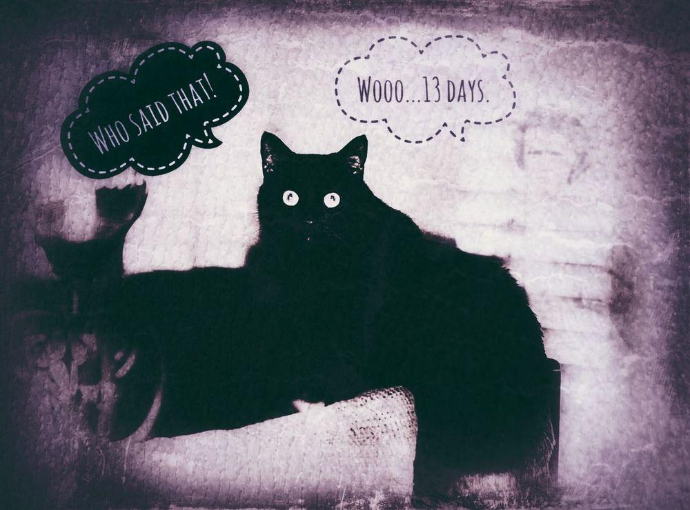 Domestic Cat Cat One Animal Feline Halloween Fantasy Creativity Ilovehalloween Black