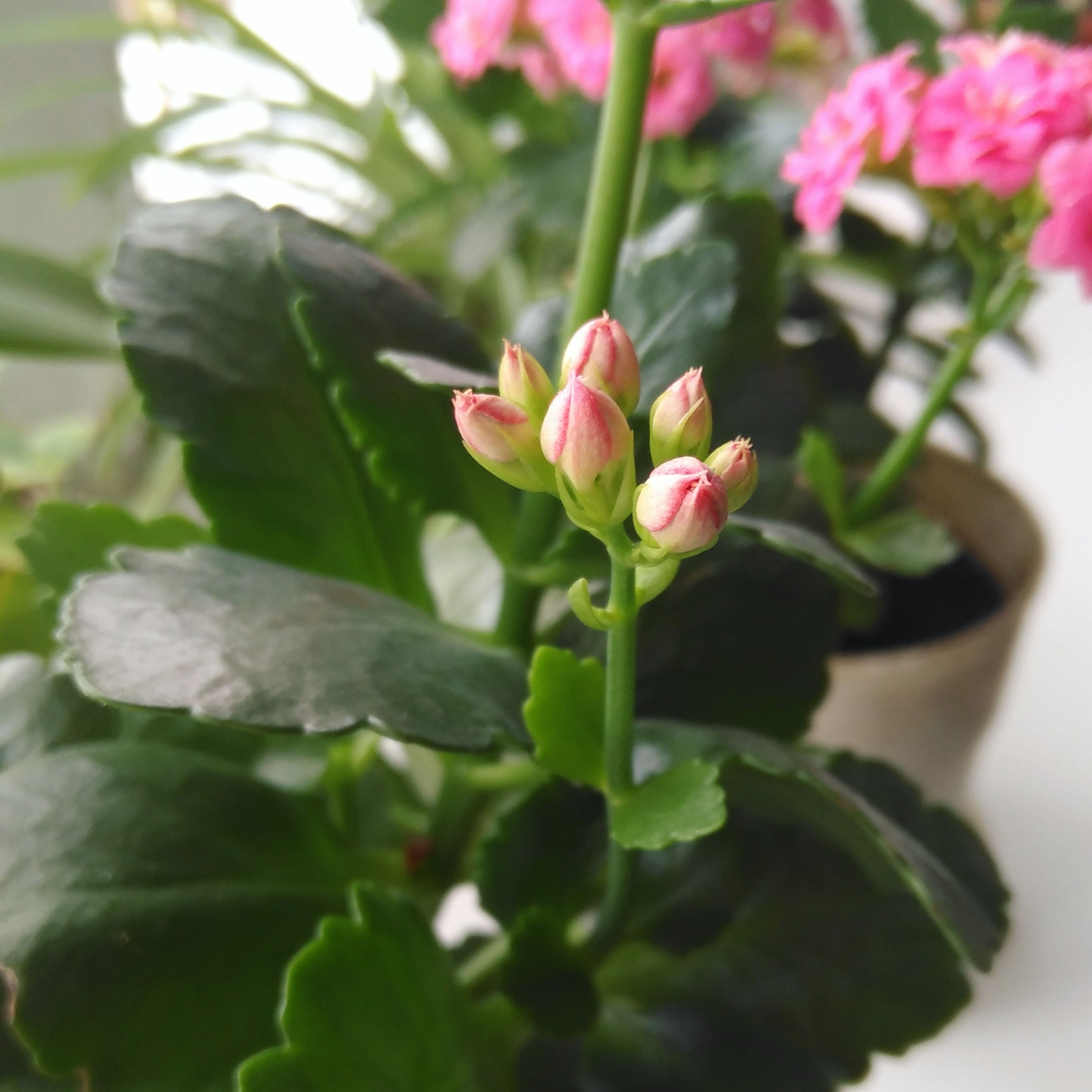 Flower Pink Color Green Color Nature Spring Plant Siberia Russia No People Cute Sweet Beauty In Nature