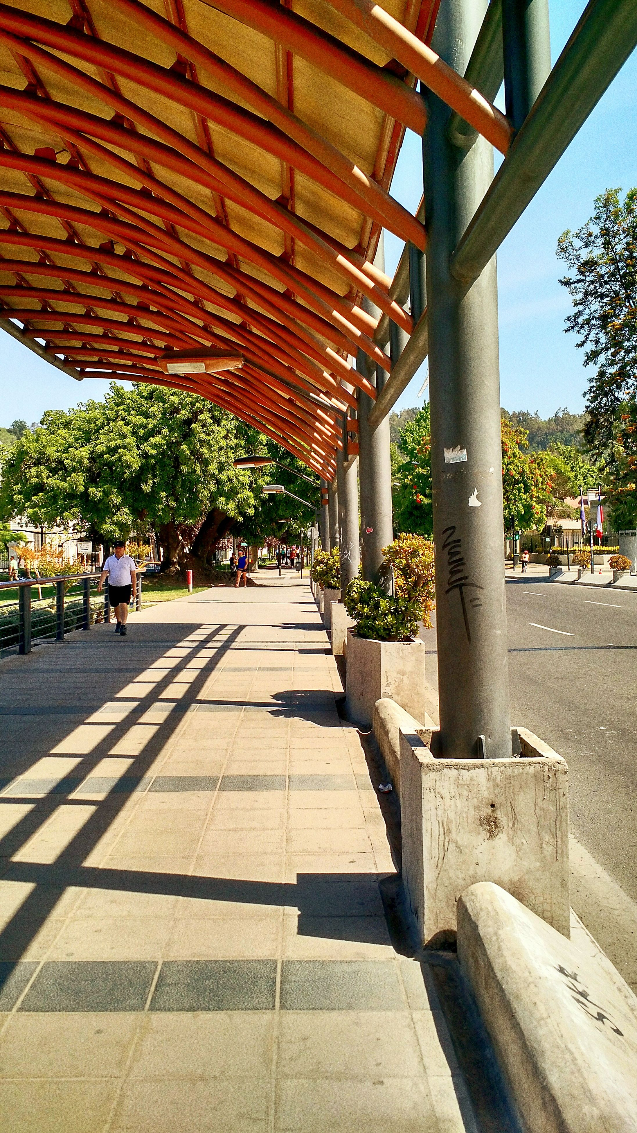 tree, built structure, sunlight, shadow, architecture, architectural column, sky, in a row, day, column, park - man made space, the way forward, footpath, growth, incidental people, empty, walkway, outdoors, sunny, railing