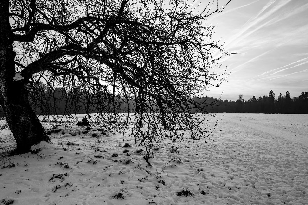 winter, snow, cold temperature, tree, nature, bare tree, tranquility, sky, outdoors, beauty in nature, tranquil scene, landscape, no people, day, scenics, branch