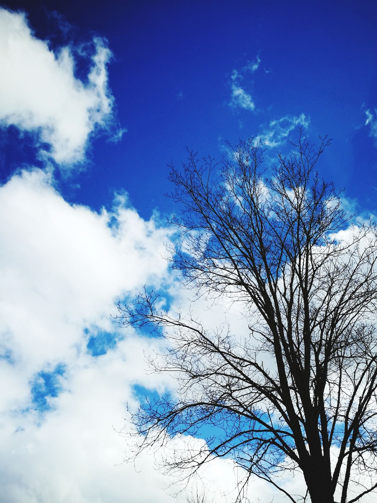 Sky Low Angle View Flying Nature Outdoors Beauty In Nature Day Growth Blue Tree Freshness No People Sky Sky And Clouds Sky And Trees The Great Outdoors - 2017 EyeEm Awards