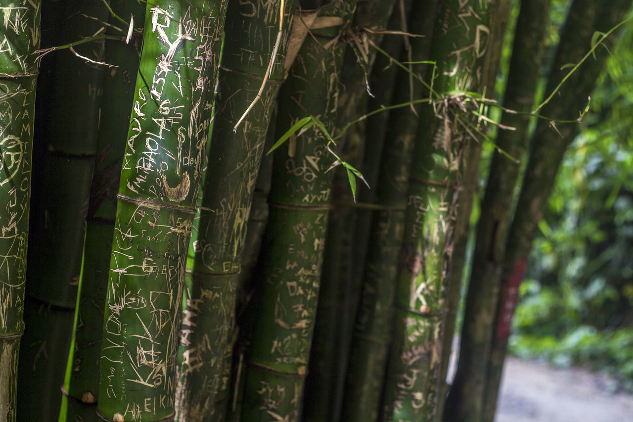 Bamboo Bamboo - Plant Bamboo Grove Beauty In Nature Close-up Communication Day Forest Green Color Growth Ibamenphoto If Trees Could Speak Nature No People Outdoors Text Tranquility Tree Tree Trunk