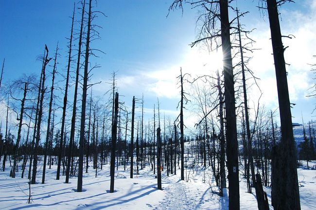 Lapland Finland Winter Snow Trees Forest Forest Photography Snowy Forest Blue Winter Day Nikon Nikonphotography Nikond70 Teamnikon