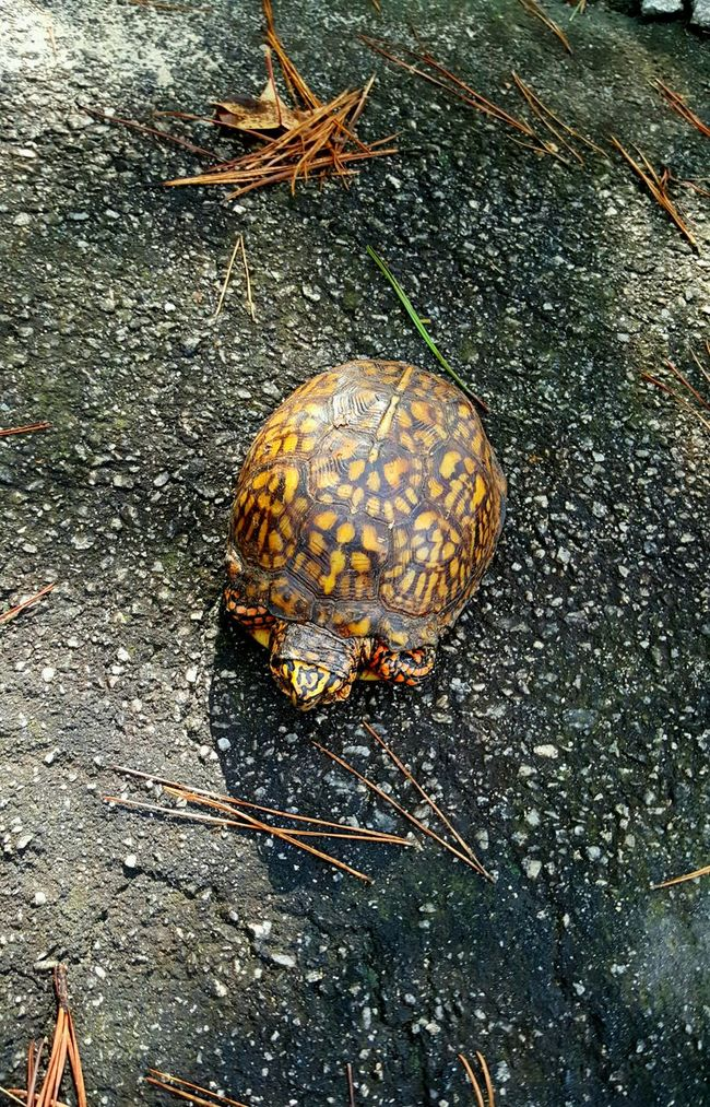 Shy little guy Turtle Nature Outdoors Freedom
