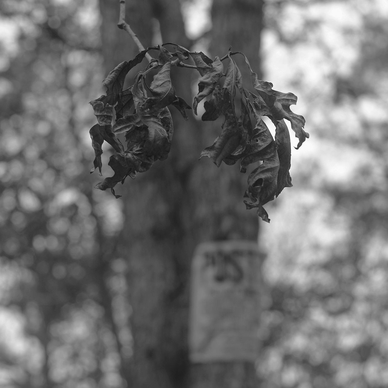 Plant Close-up Nature Accidents And Disasters Outdoors No People Day Beauty In Nature Dof_brilliance Depth Of Focus Depth Of Field Dof Nature No Trespassing Dof Tranquility Tranquil Scene Backgrounds Blackandwhite Black And White Focus On Foreground Nature Tree Full Frame Wilted Plant