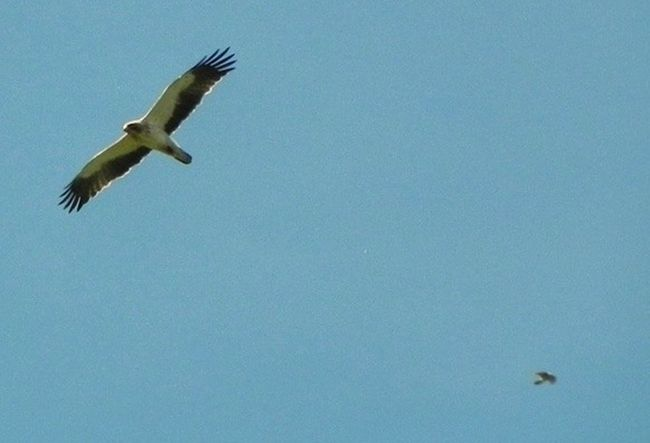 Birds Libre Como El Viento Mountains Nature