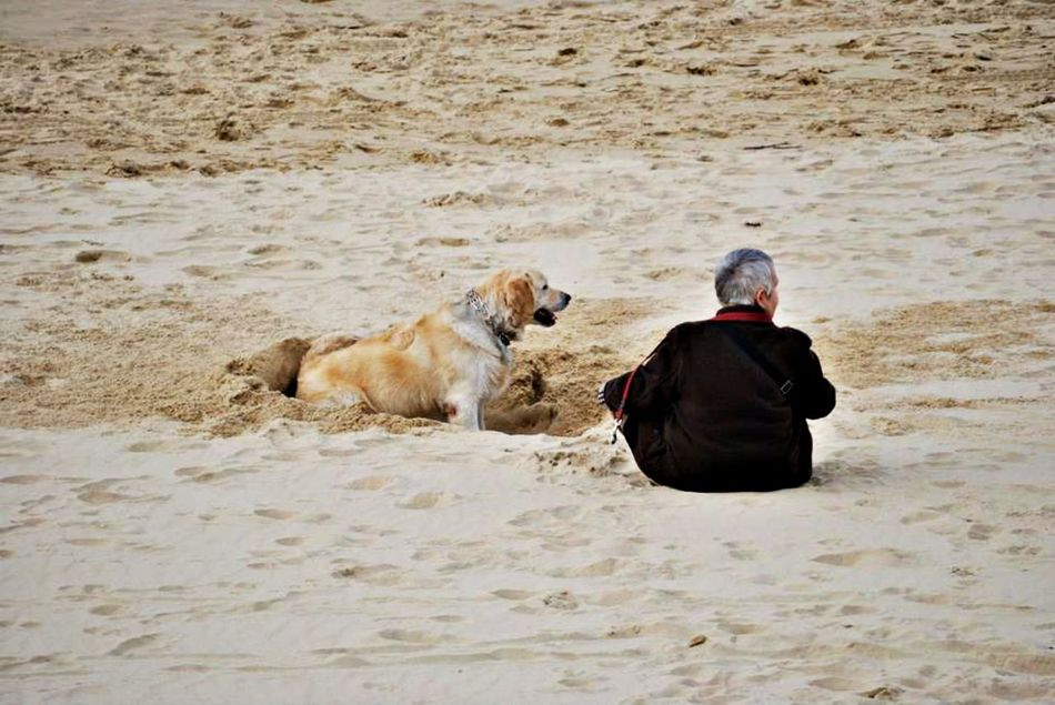 Adults Only Animal Themes Arena Beach Beach Day Colors Day Dog Dog And Man Domestic Animals EyeEm Best Shots Family History Looking Natural Beauty One Animal One Person Outdoors People Perfect Day Perfect Moment Pets Rear View Retriever San Sebastian Beach