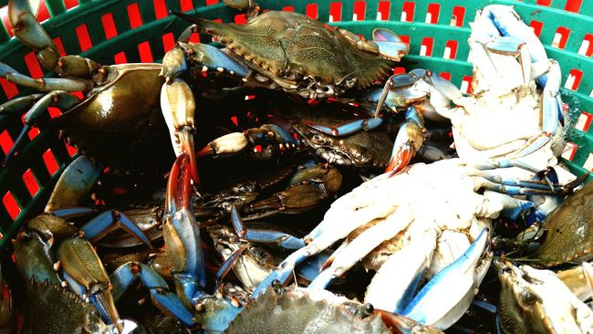 Fresh blue crabs Blue Crab Louisiana Swamp Louisiana