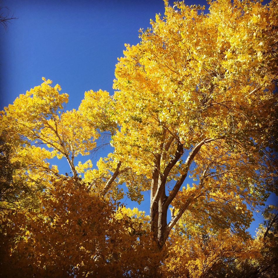 Fall at the Big Morongo Canyon Preserve Outdoors Nature Fall Fall Colors Colors Of Autumn Autumn Colors Autumn Season  Hiking Landscape