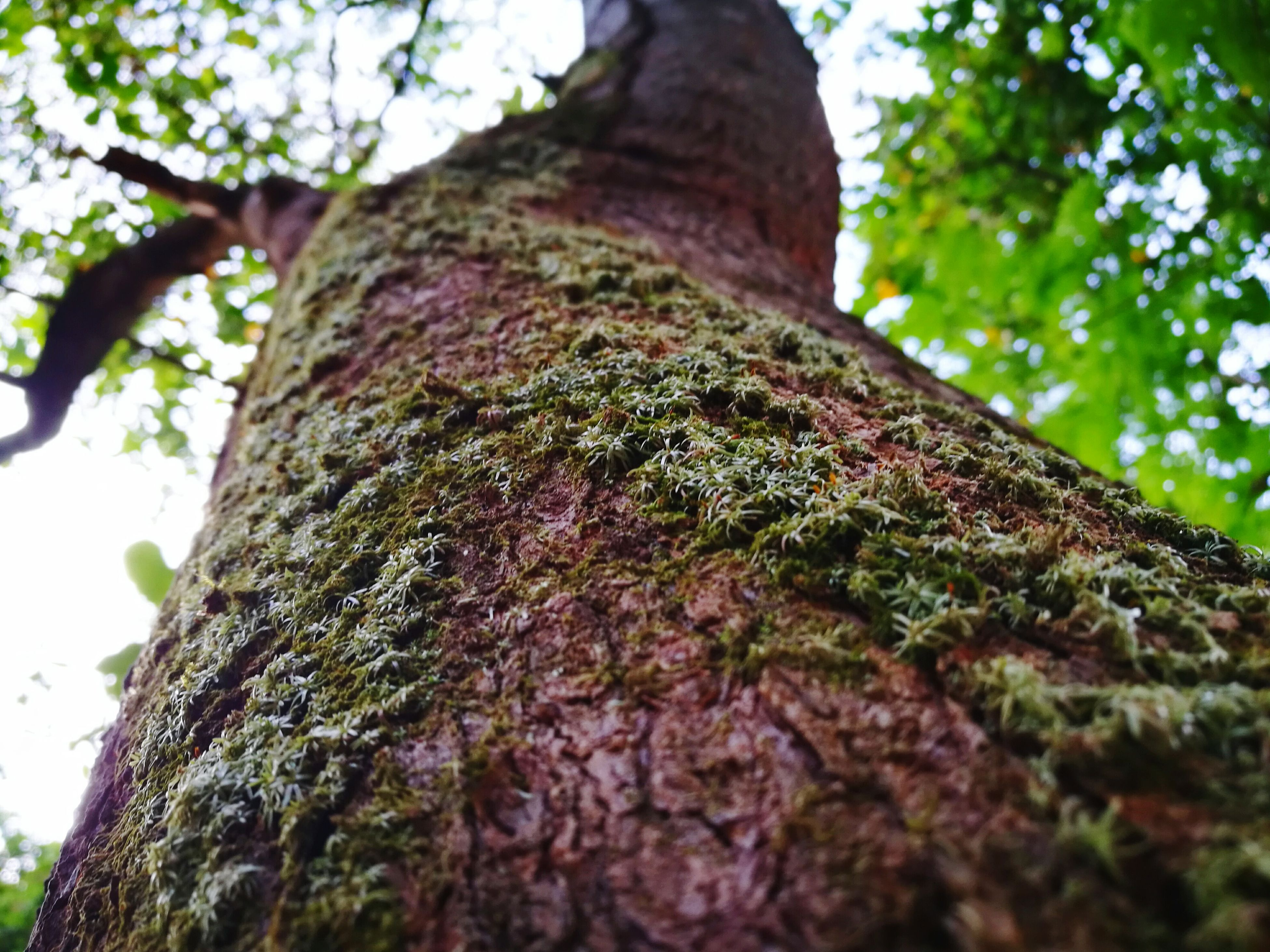 tree, tree trunk, nature, textured, low angle view, growth, bark, no people, plant bark, outdoors, green color, beauty in nature, day, close-up, branch, trunk, sky, knotted wood, woodpecker