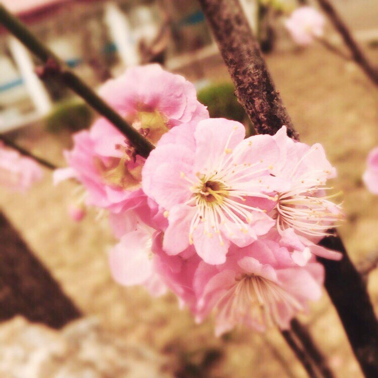 Le printemps à Pékin🍃 Hello World Relaxing Taking Photos Enjoying Life