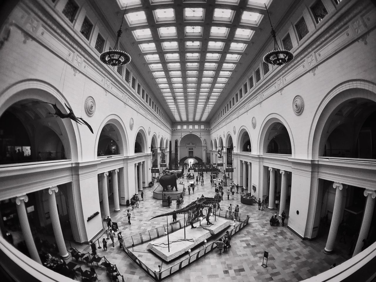 Learning things Chicago Field Museum Blackandwhite