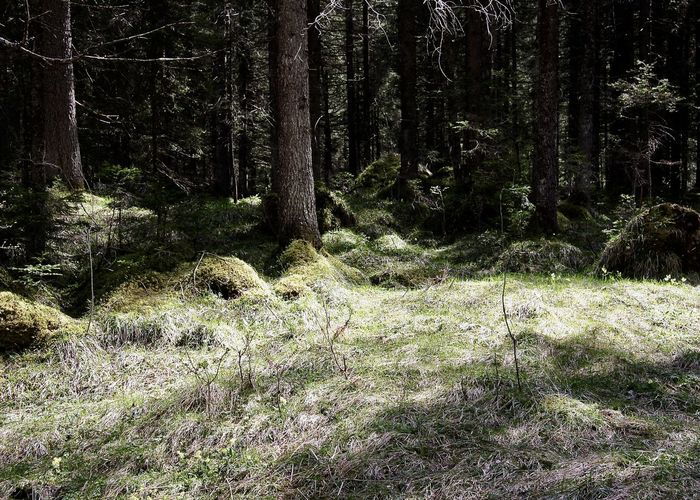 forest near vilsalpsee, tannheim, tirol Alps Beauty In Nature Color Colors Forest Grass Growth Holiday Landscape Light Light And Shadow Nature Nature Outdoor Outdoors Rural Scene Scenics Spring Sunshine Tannheimer Tal Tranquil Scene Tranquility Travel Tree Vilsalpsee The Great Outdoors - 2017 EyeEm Awards