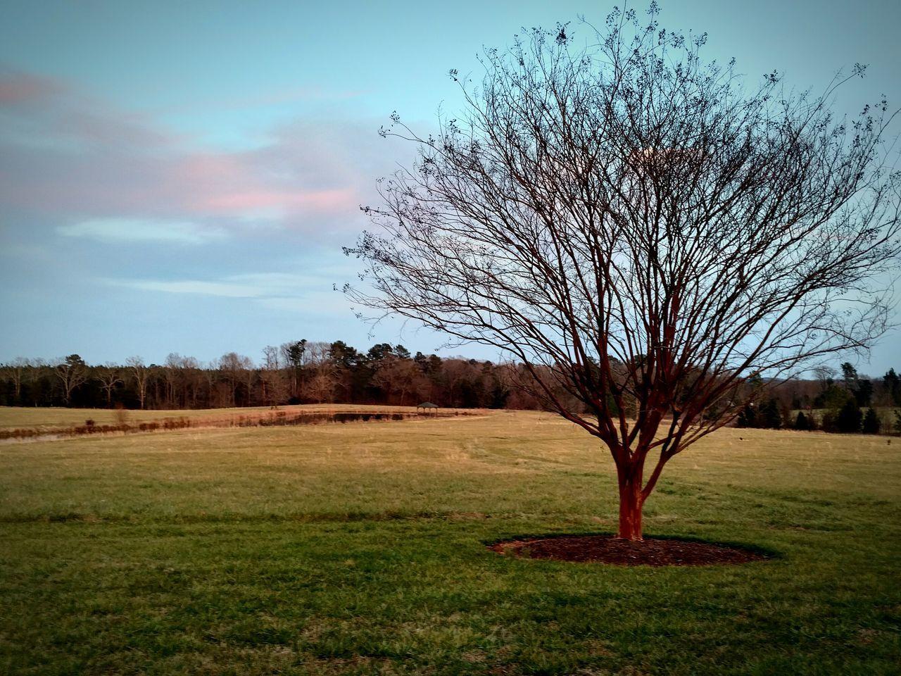 Small Tree Field Sky