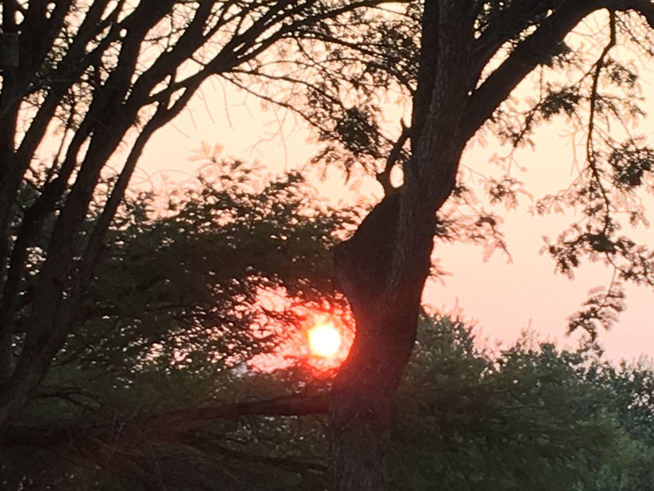 Nature Is Beauty Of Soul. Nature Photography Tree Beauty In Nature Branch Sun Sunset Johannesburg Eye4photography  EyeEmBestPics EyeEm Best Shots EyeEm Gallery Best Capture EyeEmNewHere Nature Is The Best Medicine EyeEm Nature Lover Orange Color Orange Sun Between Tree Branch Ntsudzu
