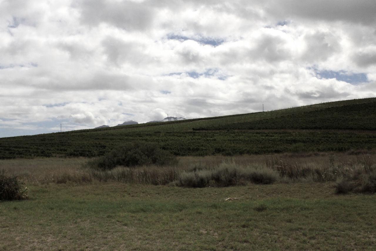 Agriculture Filter Landscape_Collection Landscape_photography Lush Foliage Stellenbosch The Cape Vinyards Viticulture Wine Farm Winelands