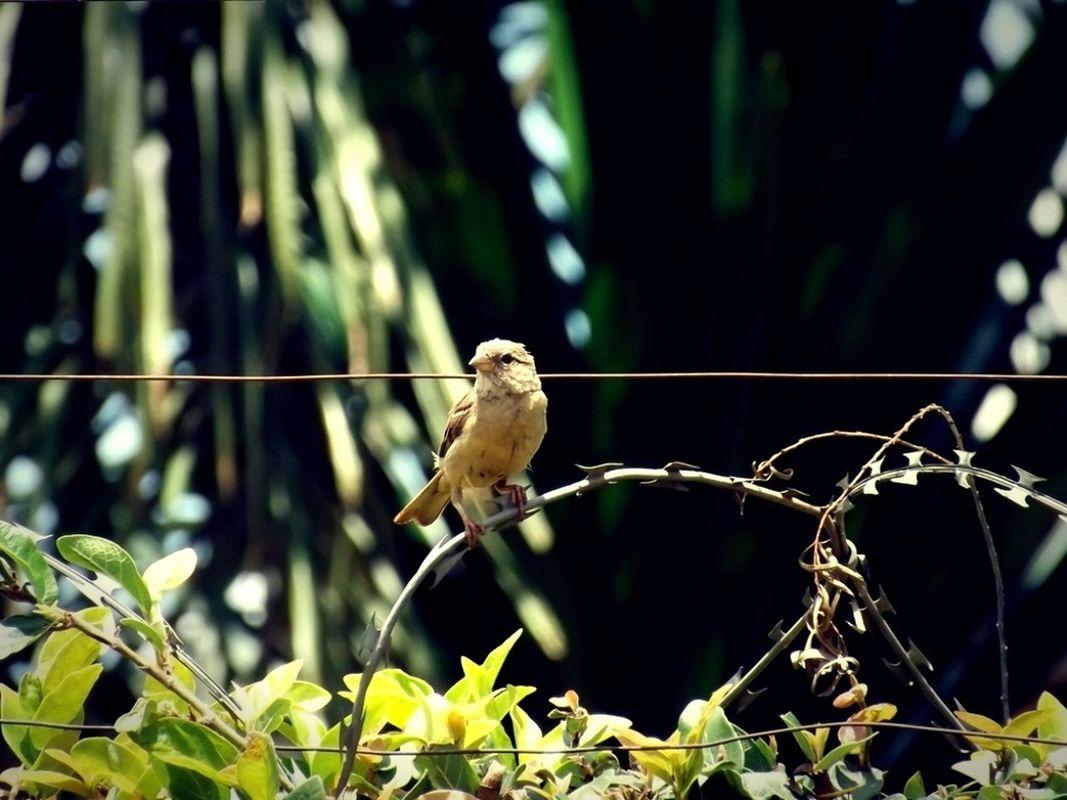 birds by twoSeats