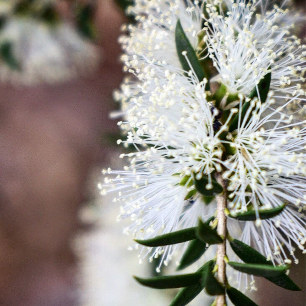 Flower Nature Growth Beauty In Nature Close-up Plant Fragility Freshness No People Blooming Outdoors Flower Head Day Water