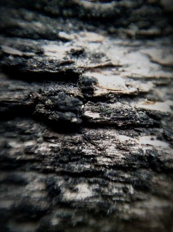 Old wooden bench . DIY Macro lens for iPhone 5s in action . Wood Wooden Bench Macro IPhone Photography