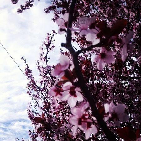 Árbol de cerezos!!! n.n