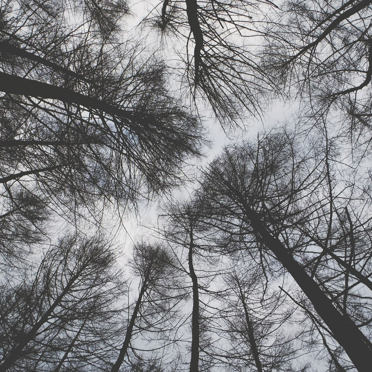 Looking up. Lunchtime on a trail near Bingley. West Yorkshire Looking Up Randombranchiness Treescollection