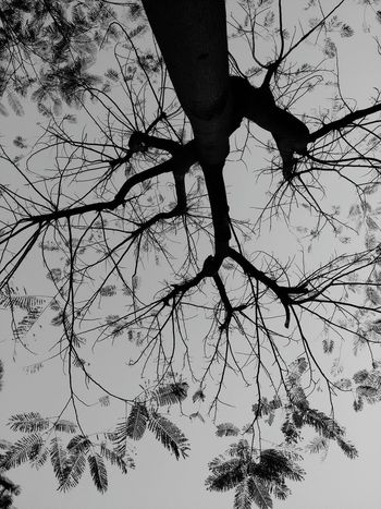 Nature Nopeople Evening Trees From Where I Sit Evening Time Garden Mobilephotography Light And Shade Nature Art Tree Silhouette Silhouettes Of Trees In The Garden Tree Of Life Nature Textures From My Point Of View Tree And Sky Blackandwhite Blackandwhite Photography From My Polnt Of View From Below Beautiful Nature Beauty In Nature Pattern, Texture, Shape And Form