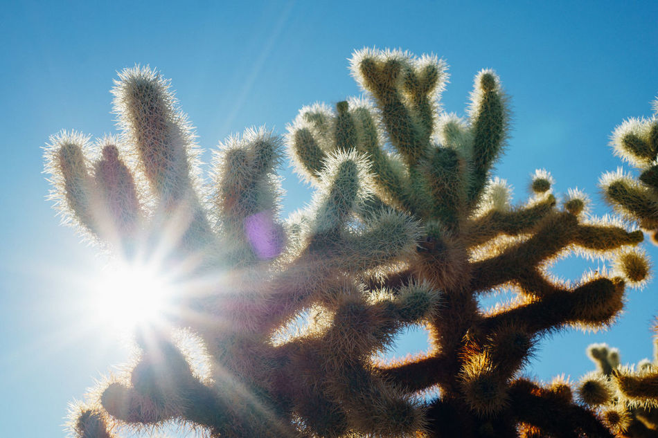 Beauty In Nature Cactus Close-up Day Growth Low Angle View Nature No People Outdoors Sky Sunlight